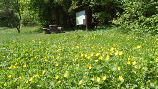 Fasten wandern im Harz in Wernigerode
